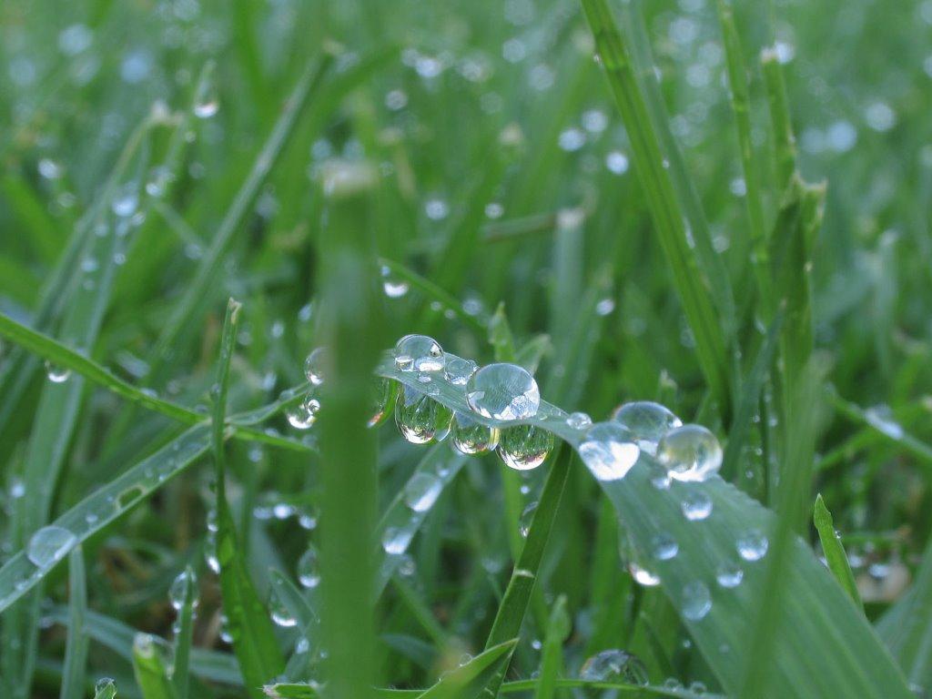 Nature Wallpaper: Wet Grass