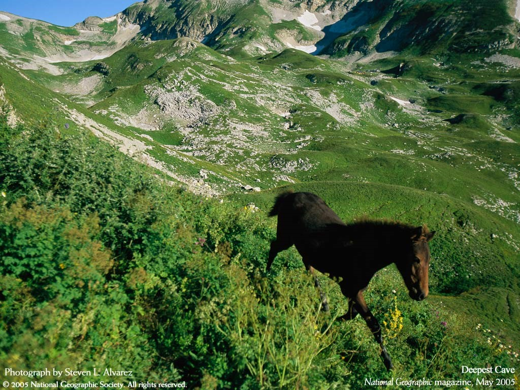 Nature Wallpaper: Wild Horse
