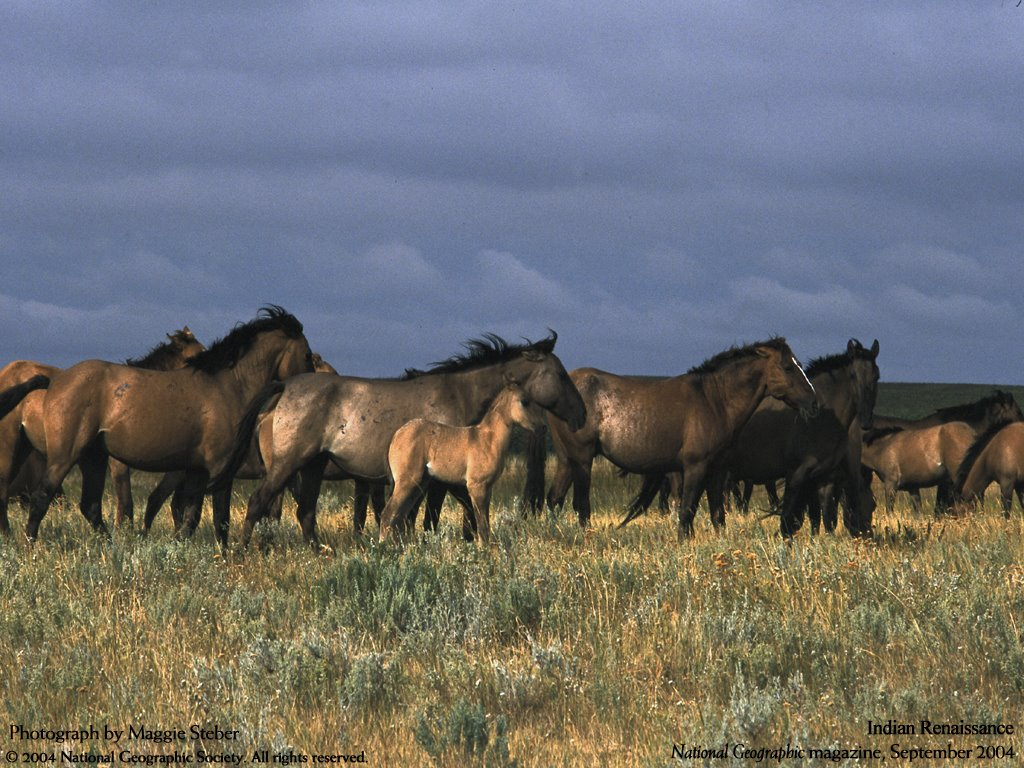 Nature Wallpaper: Wild Horses