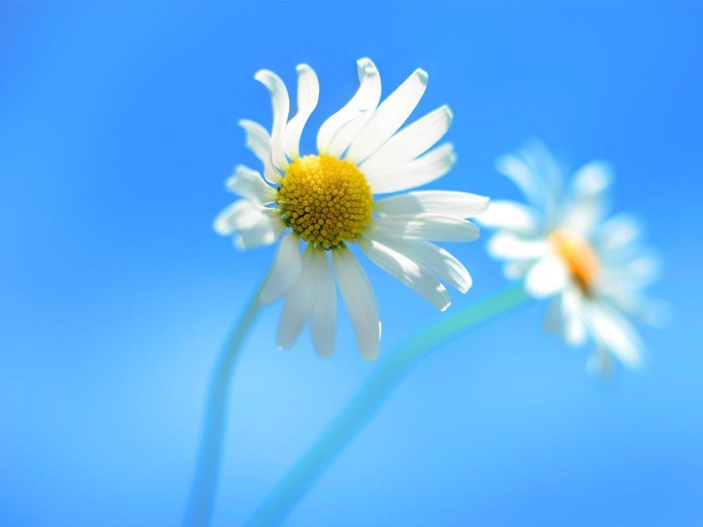 Nature Wallpaper: Windows 8 Official Wallpaper - Flowers