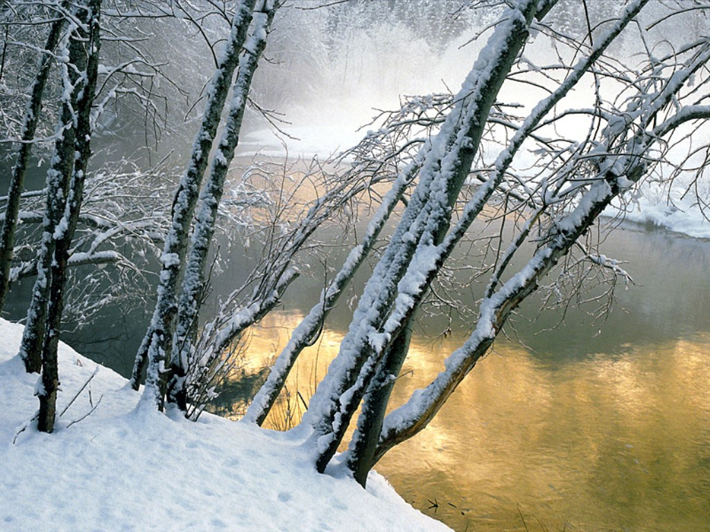 Nature Wallpaper: Winter Landscape