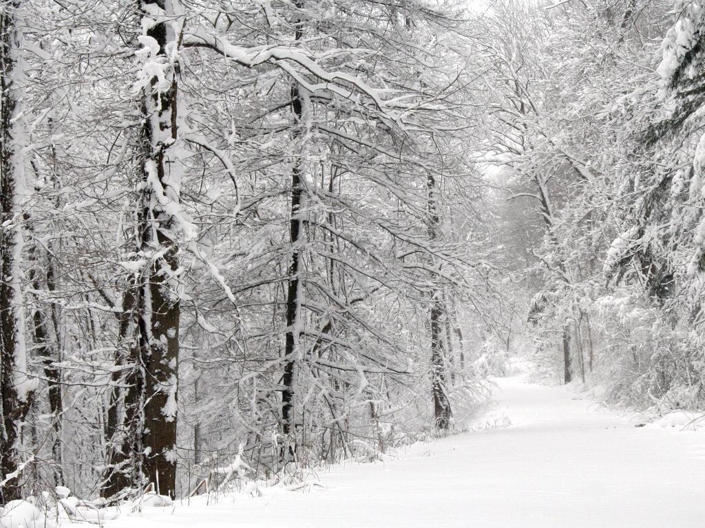 Nature Wallpaper: Winter Path