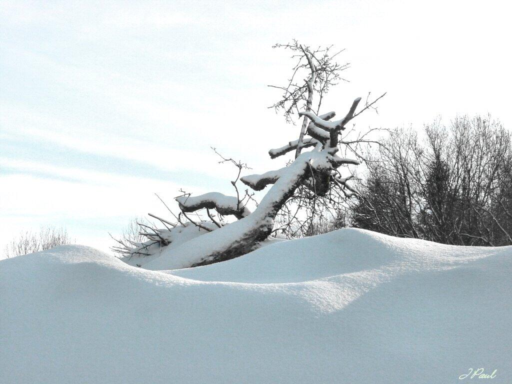 Nature Wallpaper: Winter - Tree
