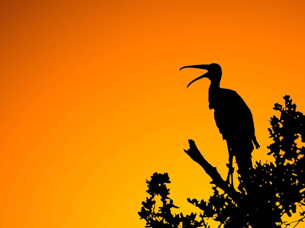 Nature Wallpaper:  Woodstork - Sunset
