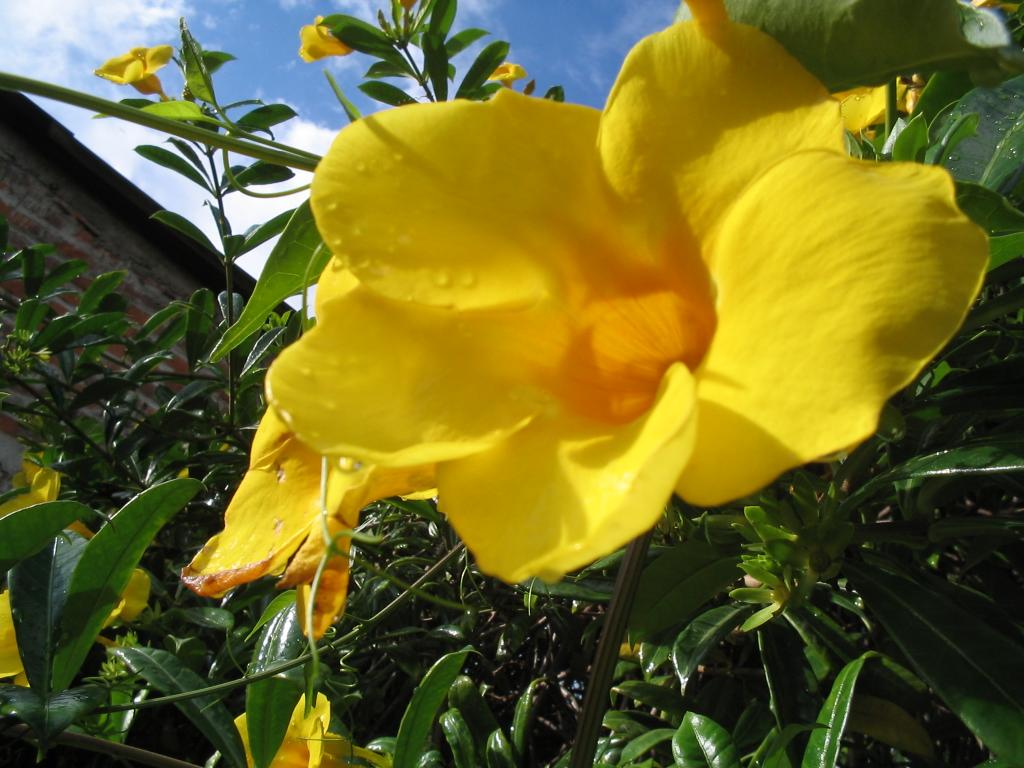 Nature Wallpaper: Yellow Flower