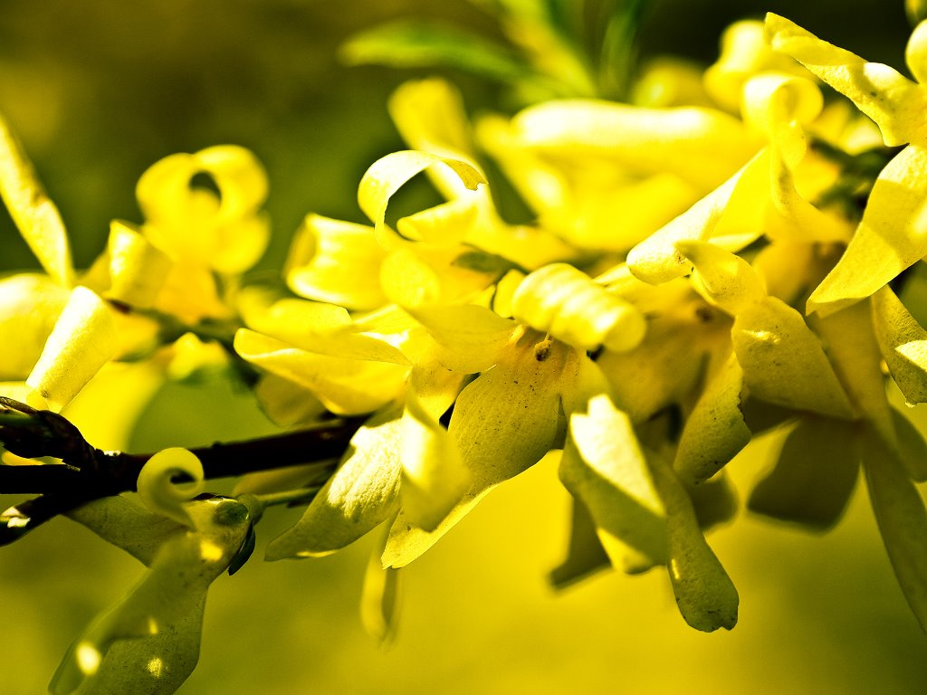 Nature Wallpaper: Yellow Flower