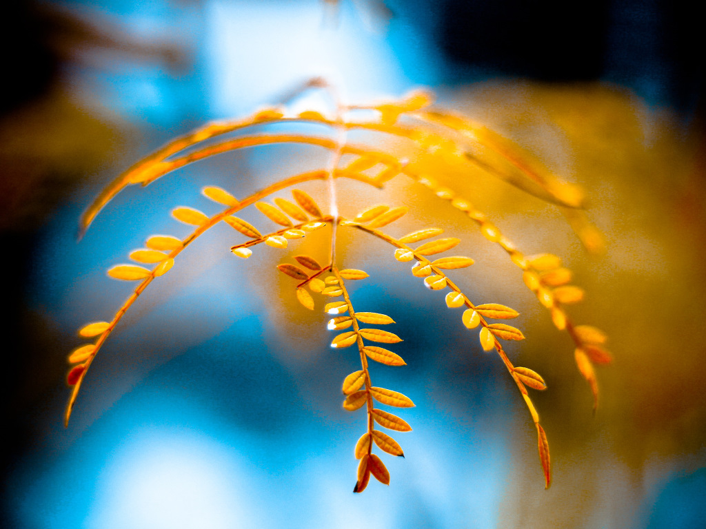 Nature Wallpaper: Yellow Leaves